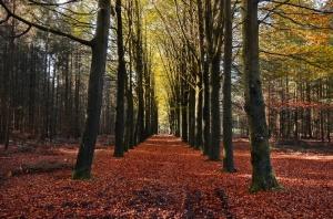 autumn-large (2)