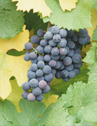 Columbia Cascade Wineries