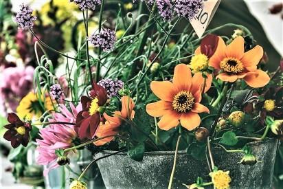 flowers in pots II