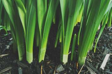 gardening IIII