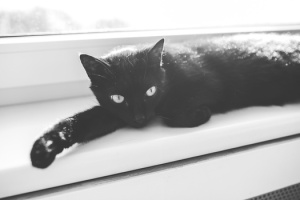 animal-eyes-animals-black-medium