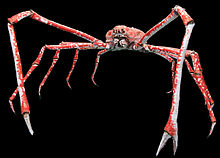 japanese-spider-crab-wikipedia