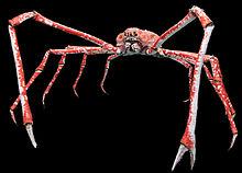 japanese-spider-crab-wikipedia