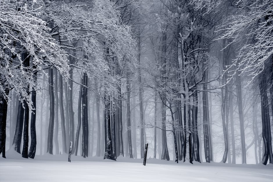 snow-and-trees