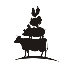 livestock illustration